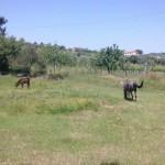 28_Raduno-Clubcampani-Flumeri09062013_extra_29